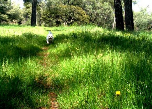 http://le-vioc.cowblog.fr/images/Pepooooooooooo.jpg